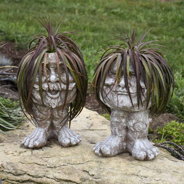Mangave Bad Hair Day Ppaf Walters Gardens Inc