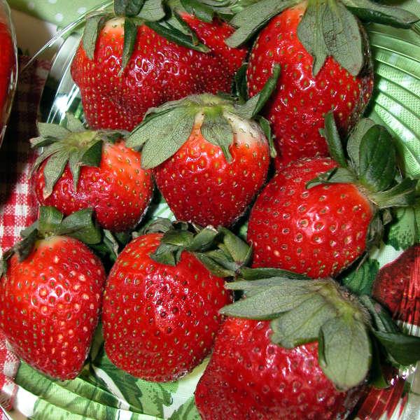Strawberries 'Allstar' Junebearing Strawberry