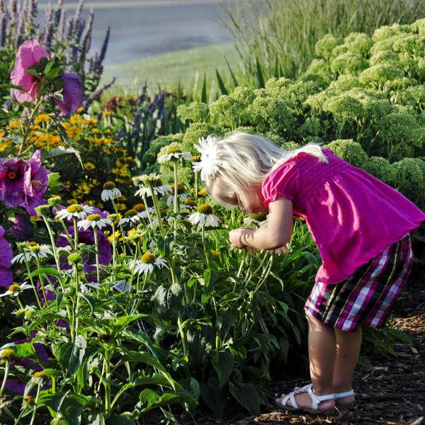 Echinacea 'Fragrant Angel' Coneflower