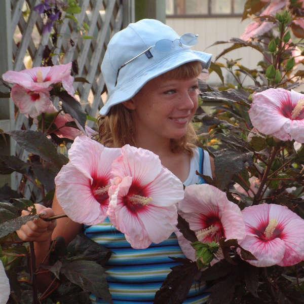 Hibiscus 'Kopper King' Rose Mallow