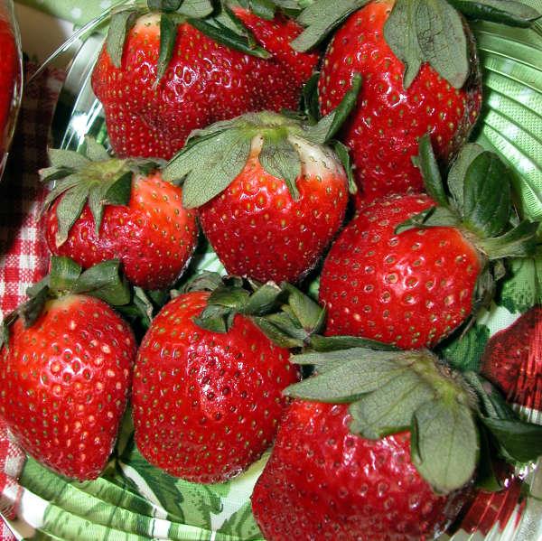 Strawberries 'Honeoye' Junebearing Strawberry