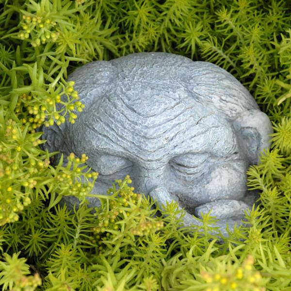 Sedum 'Angelina' Blue Spruce Stonecrop