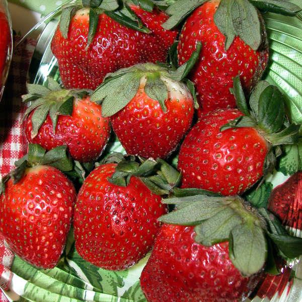 Strawberries 'Fort Laramie' Everbearing Strawberry