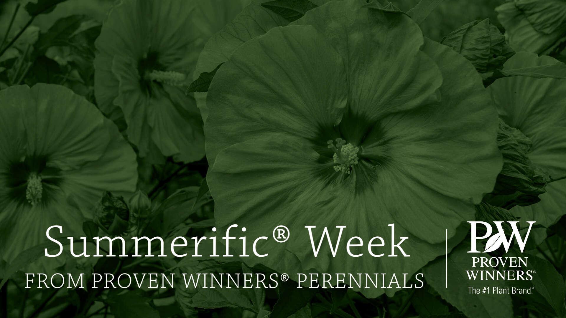 Summerific Week | Celebrating Summerific Hibiscus