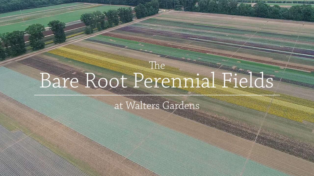 Bare Root Perennial Fields
