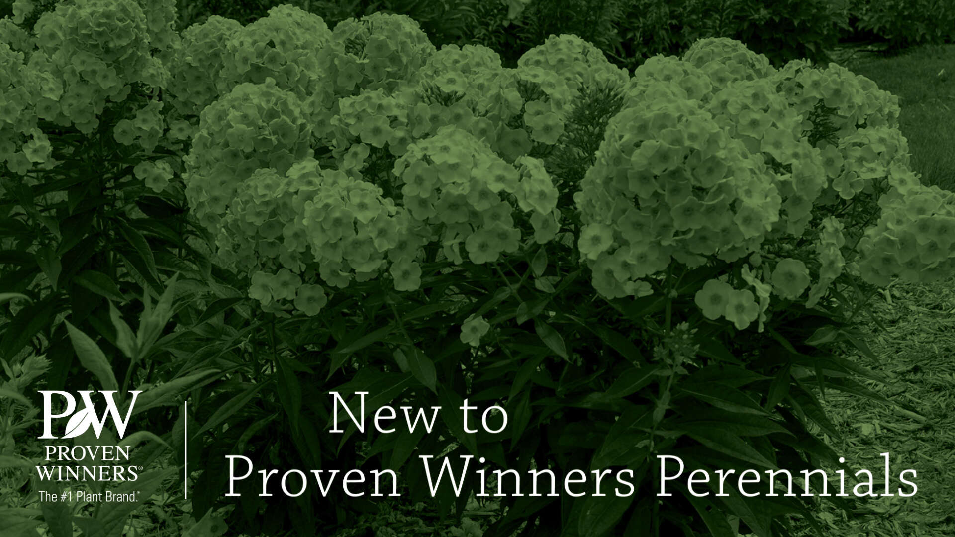 New to Proven Winners Perennials (Retail 2021)