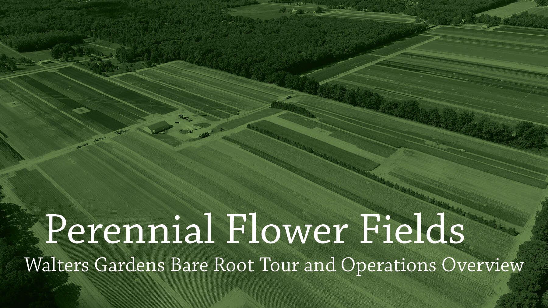 Perennial Flower Fields Tour