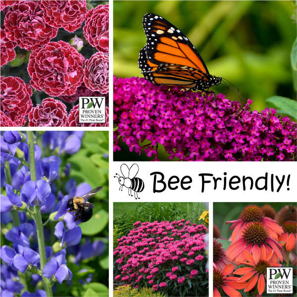 Bee friendly perennial resource why should you plant pollinator friendly plants mightylinksfo