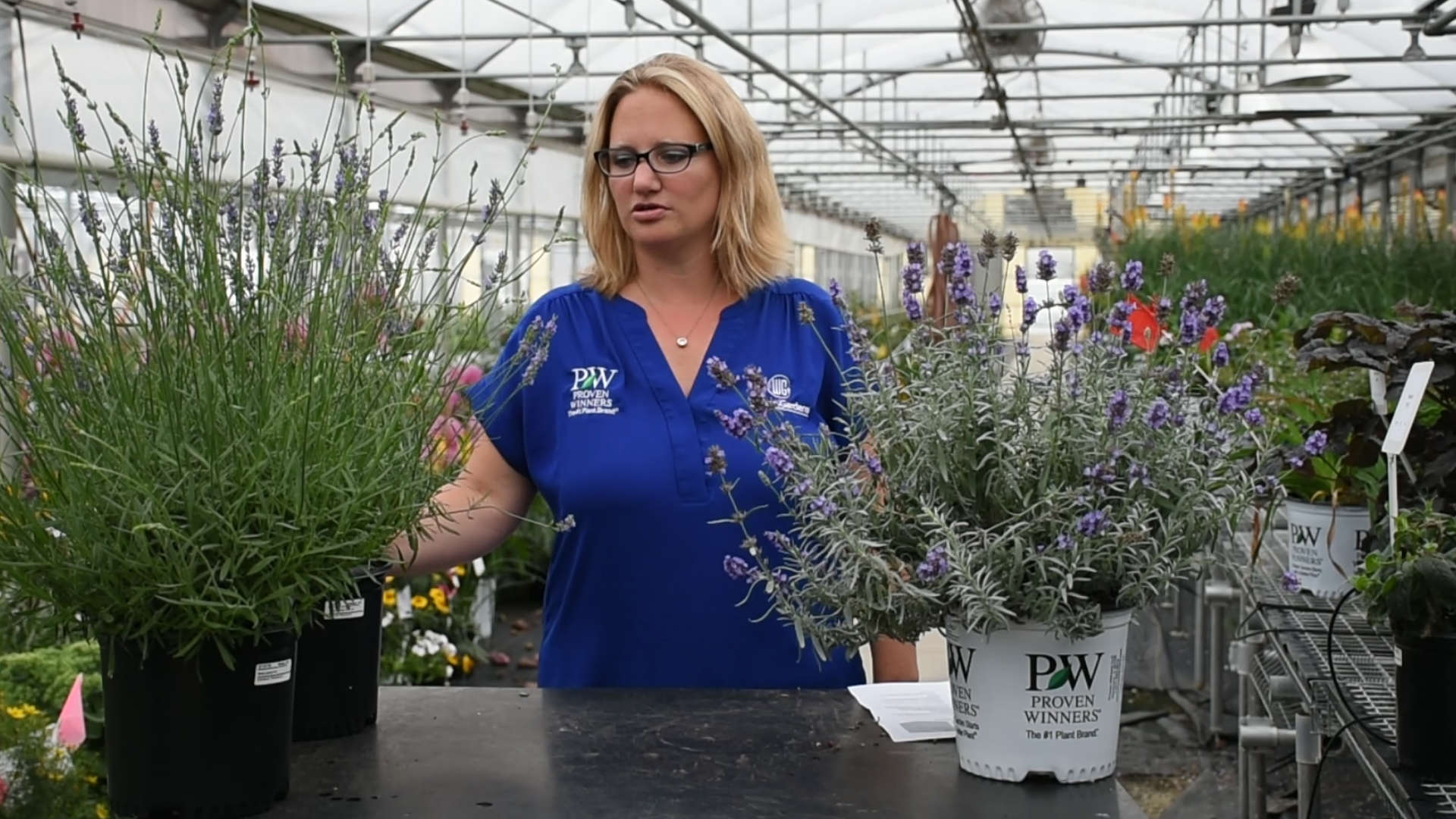 Lavender Production Tips