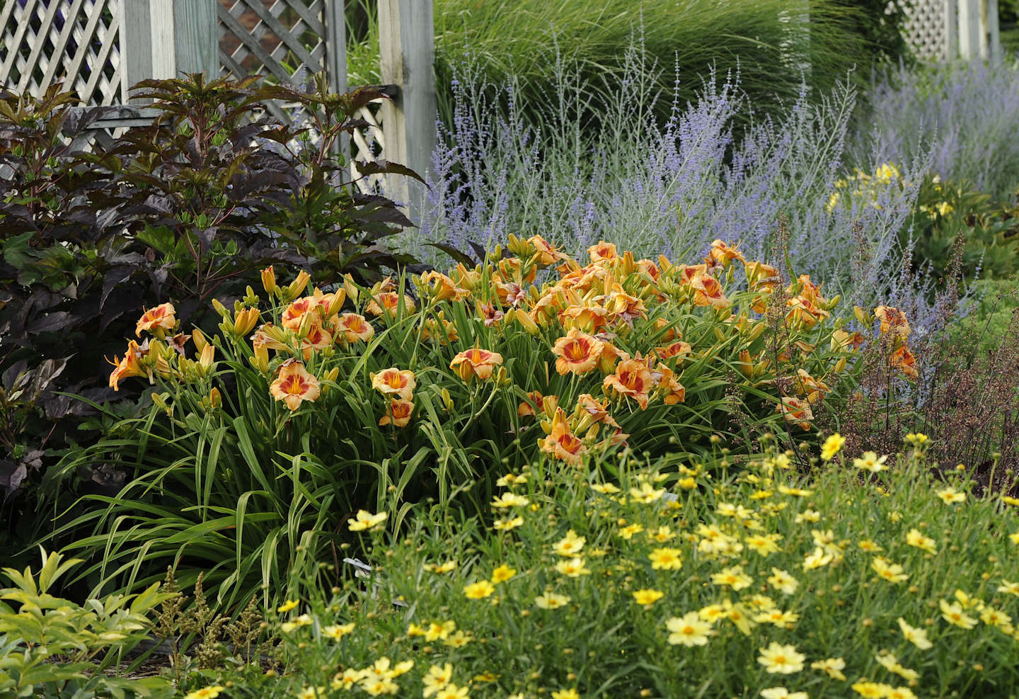 Designing with daylilies walters gardens inc using color effectively izmirmasajfo