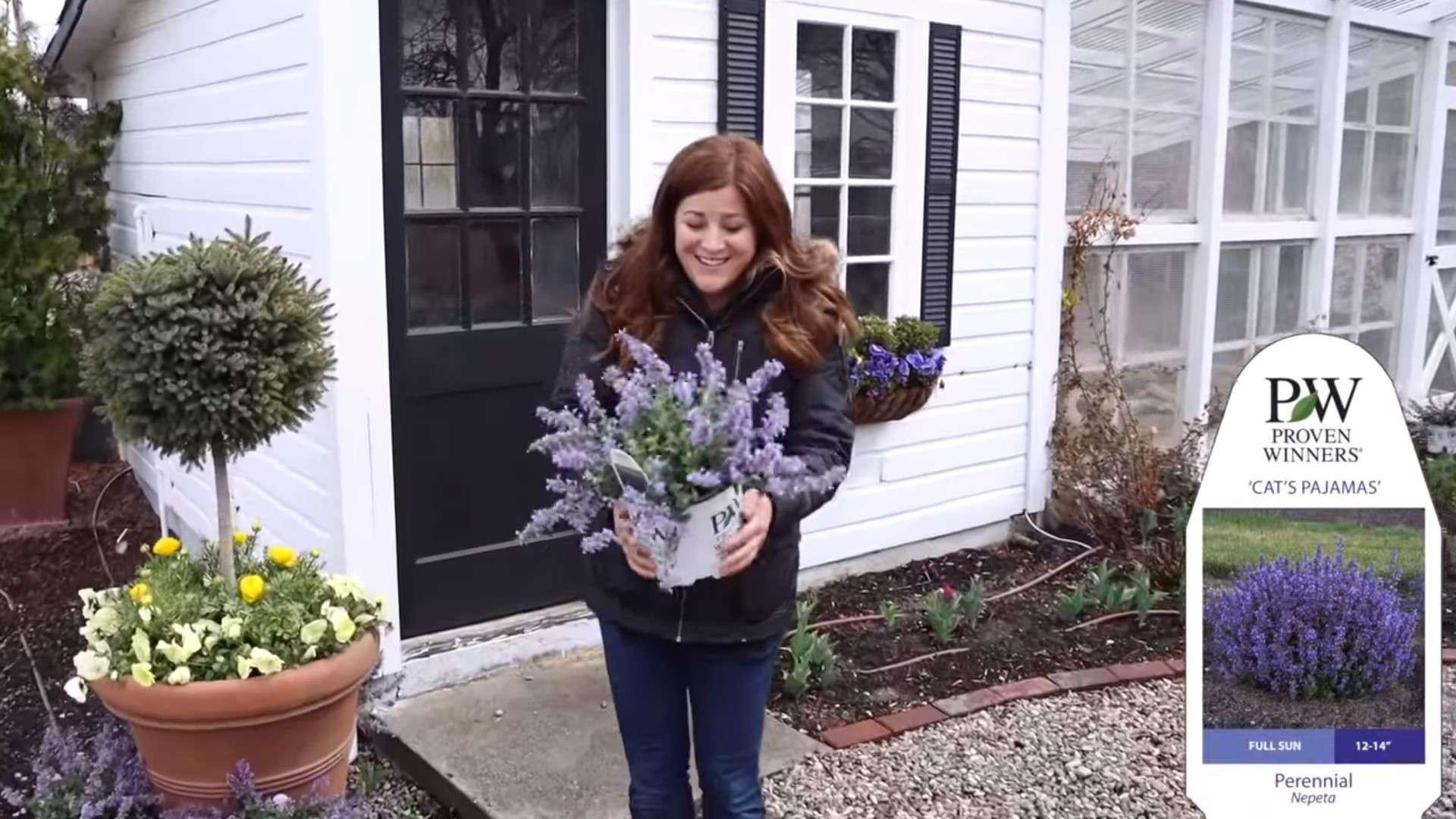 Planting Some Gorgeous Hostas Garden Answer Perennial Resource