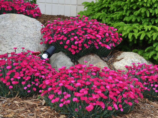 New Proven Winners® Perennials for 2017