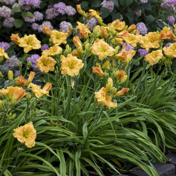 19 Perennials for Clay Soil | Perennial Resource
