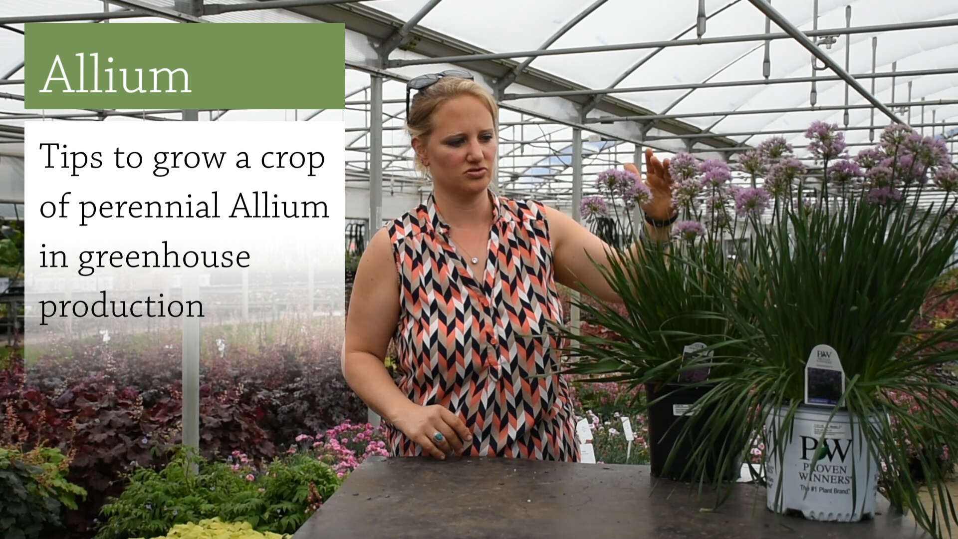 Allium Culture and Production Tips