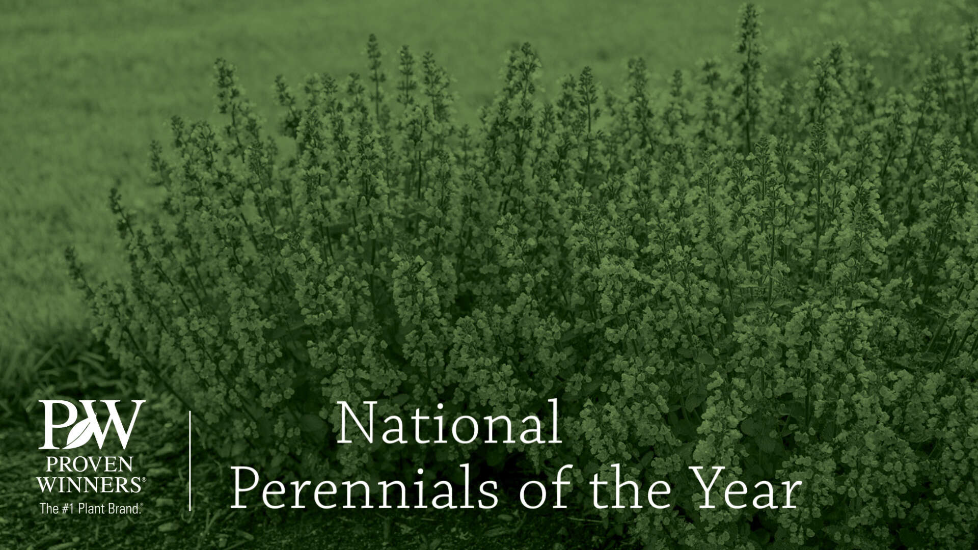 2021 National Perennials of the Year
