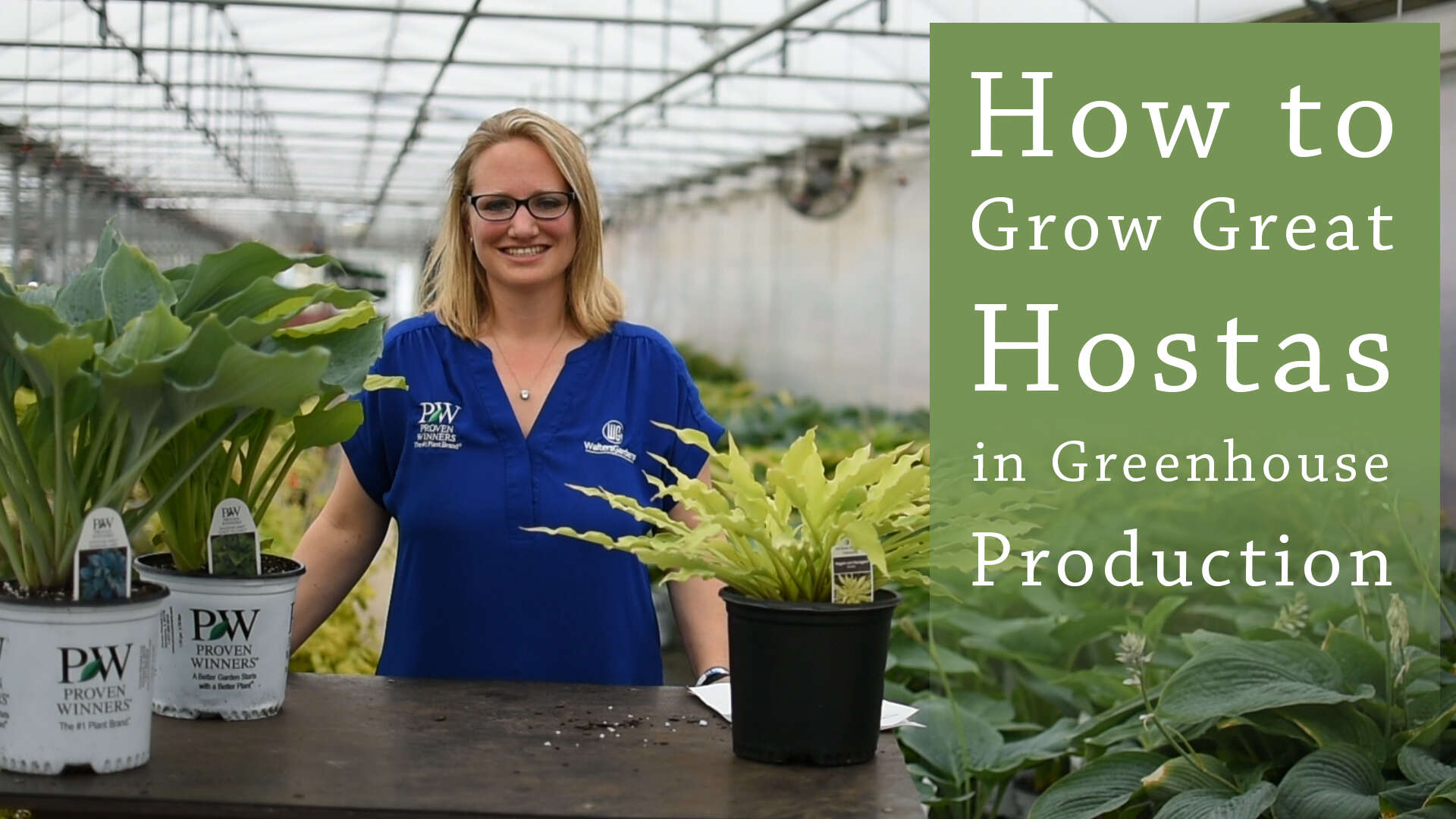 Hosta Greenhouse Production Tips