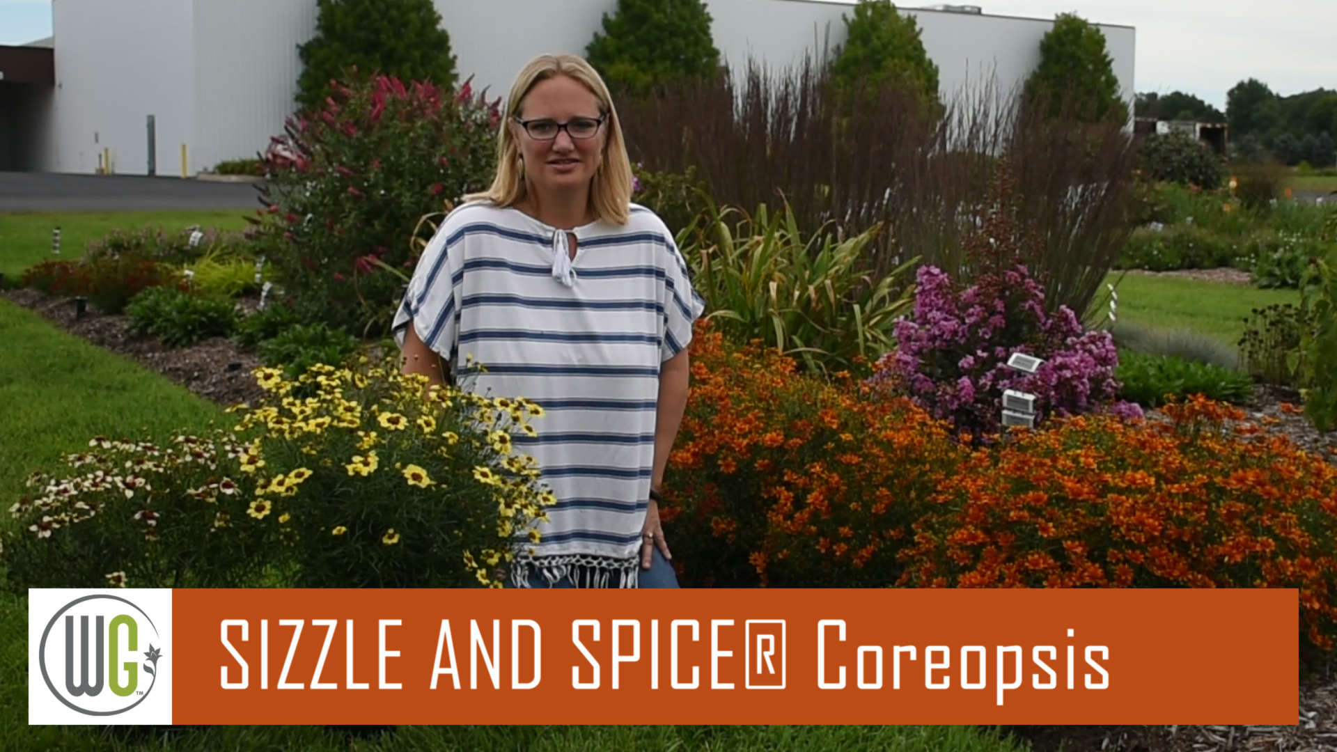 All About the Coreopsis Sizzle & Spice® Series