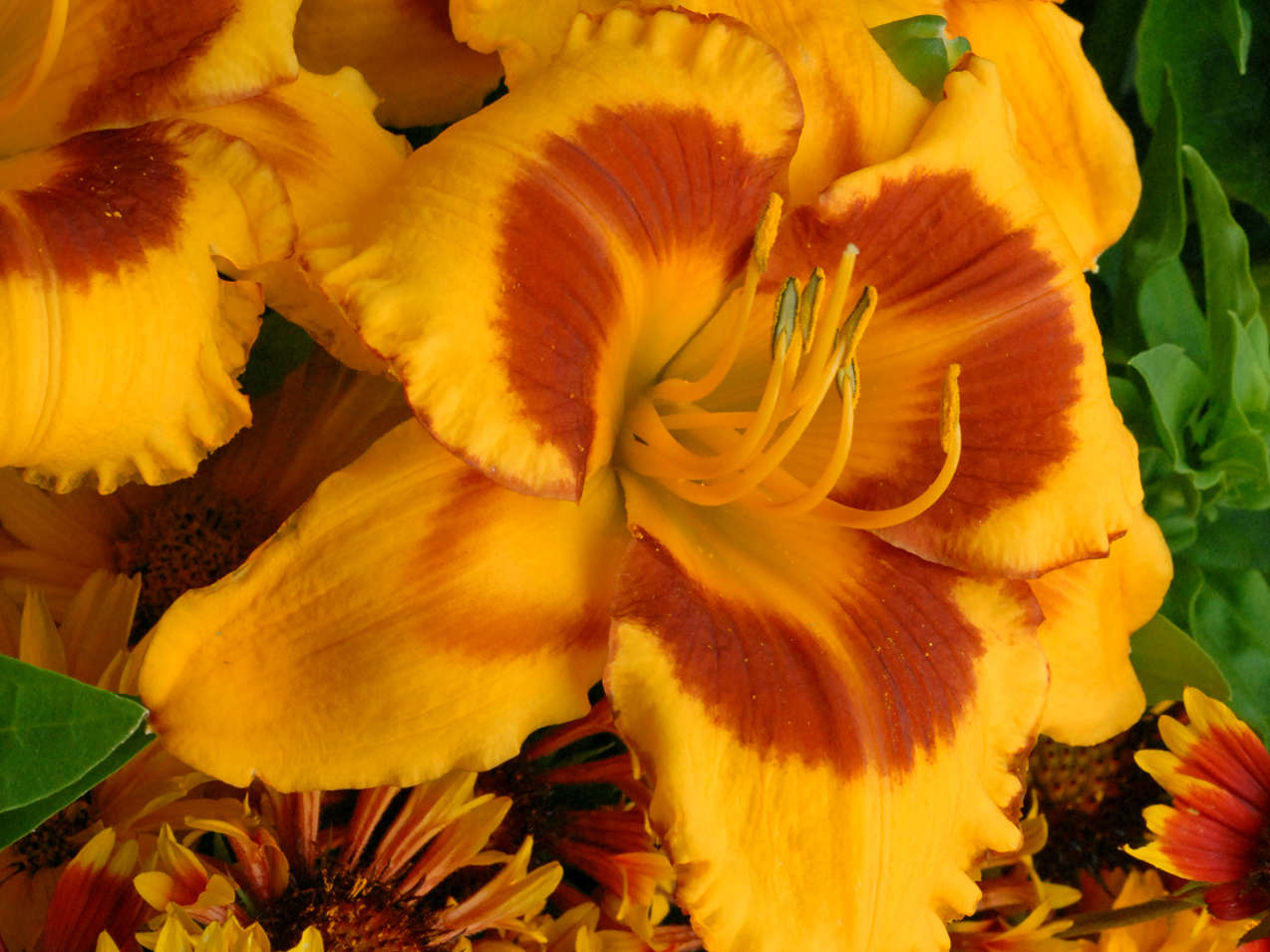 Award Winning Daylilies