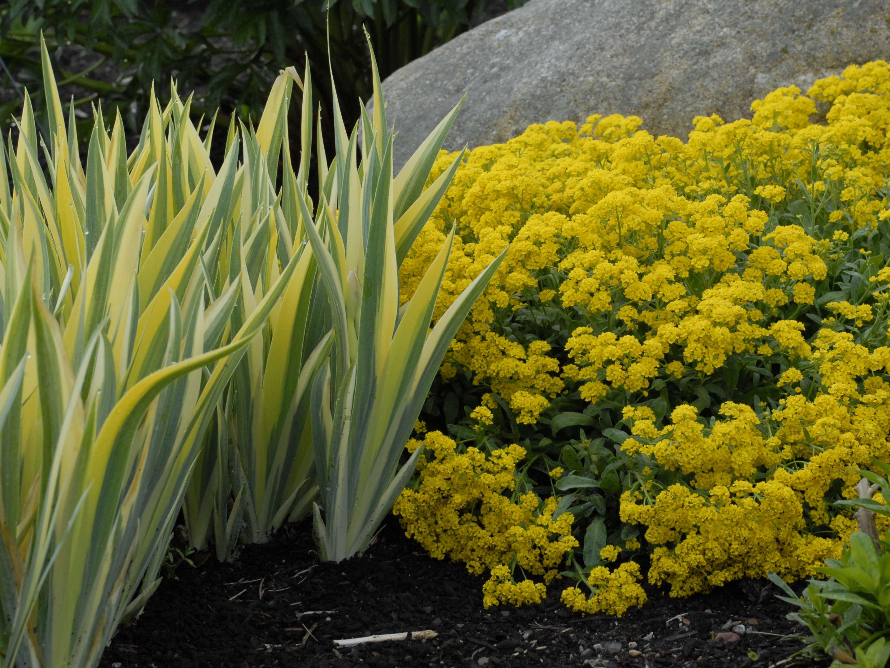 Step 4 Garden Design Elements Perennial Resource